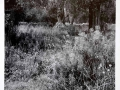 ancient_olive_grove-_samria_gorge-_crete
