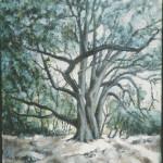 l'albero 50x40