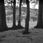 Wooded Knoll, Brampton. Looking East.