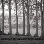Wooded Knoll Margin, Brampton. Lloking West