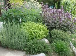 Aromatiche in giardino 1 for Aiuole perenni