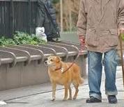 cane e anziano piccola