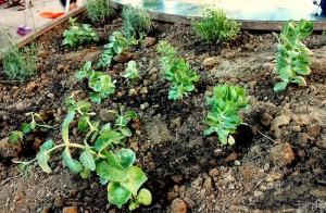 piante piantate