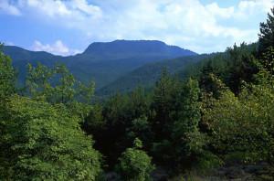 parco-foreste-casentinesi