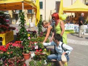 mercato green