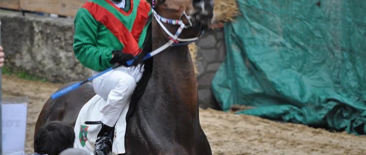 cavallo palio di Buti