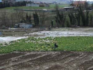 danni-agricoltura-maltempo-300x225