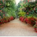 giardinosemplici2