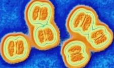 meningococco b meningite