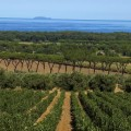 turismo-agricoltura bolgheri-suvereto-img