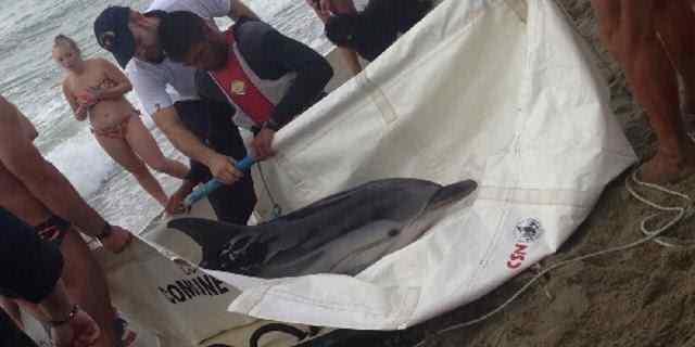 delfino viareggio