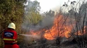incendio boschivo