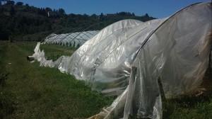 nubifragio danni agr2