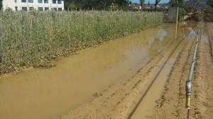 nubifragio danni agr3