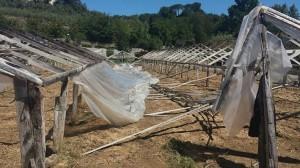 nubifragio danni agricoltura