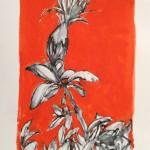 Centaurea scannensis, 2015. Tecnica mista su carta.