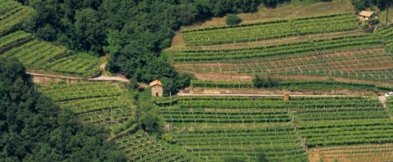 biodiversità agraria
