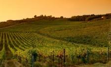 chianti e vigne agricoltura