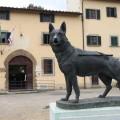 esibizione scuola cani guida scandicci