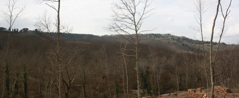 legno chianti
