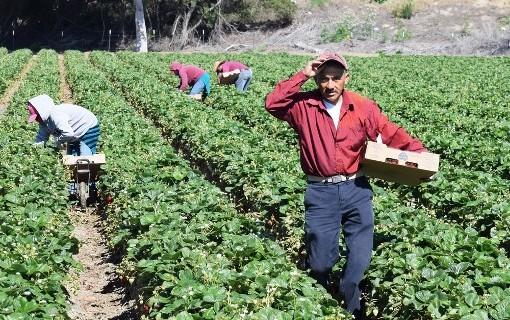 migranti nei campi da coldiretti