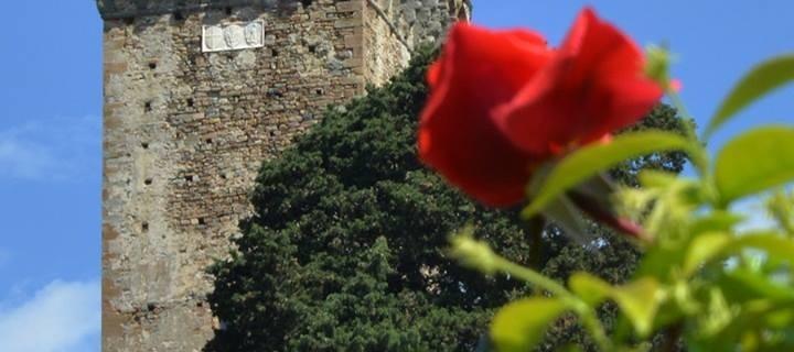 Vico in fiore Parri