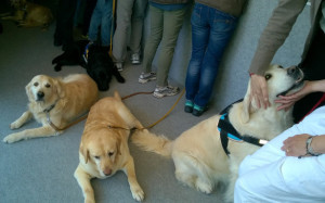 Pet therapy_02 (1)