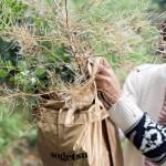 Workshop con Martina Della Valle e Botanical / Ikebana Artist - Rie Ono