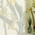 giardino-fiorito