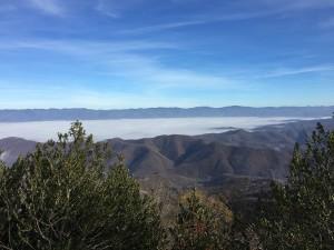 monte-senario-nebbia-e-agrifogli