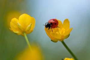 piante-che-attirano-insetti-utili