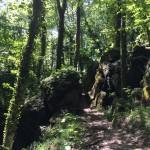 bosco delle fate