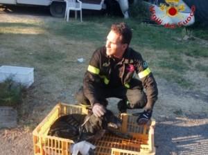 vigili del fuoco salvano cana