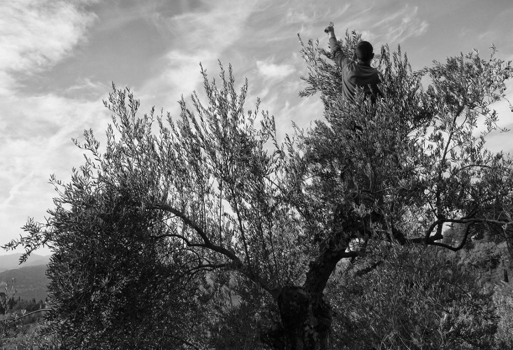 3-La Linea della Poesia_Uliveto_Brisighella (1)