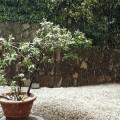 neve nevica