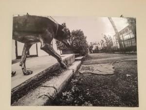 scatti da cane 1