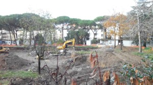 alberi e tagli, scuola dino compagni