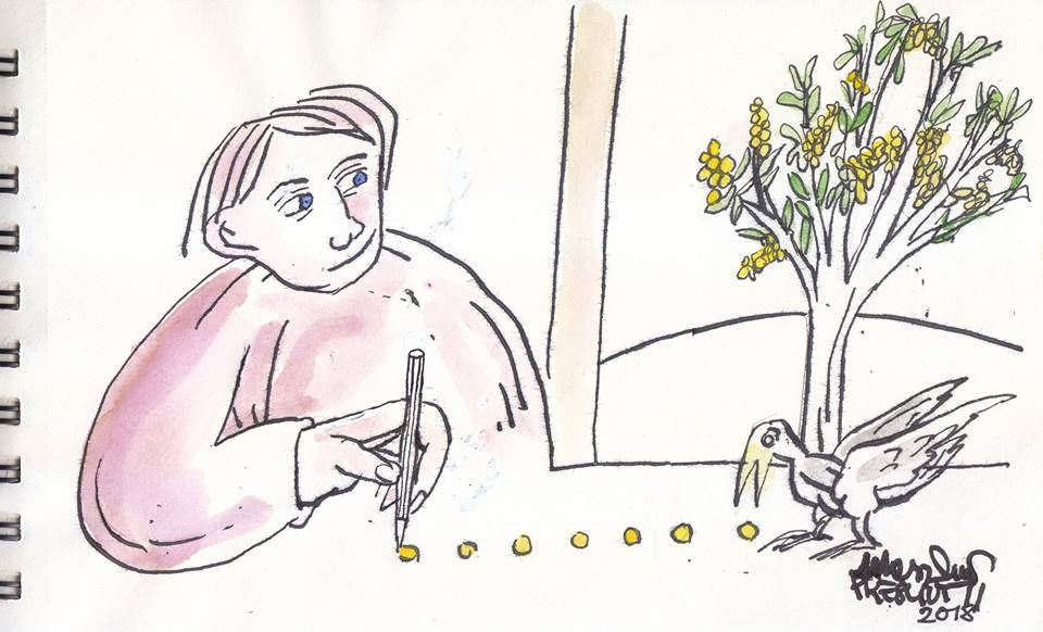 Mimosa, non cogliamola, piantiamola
