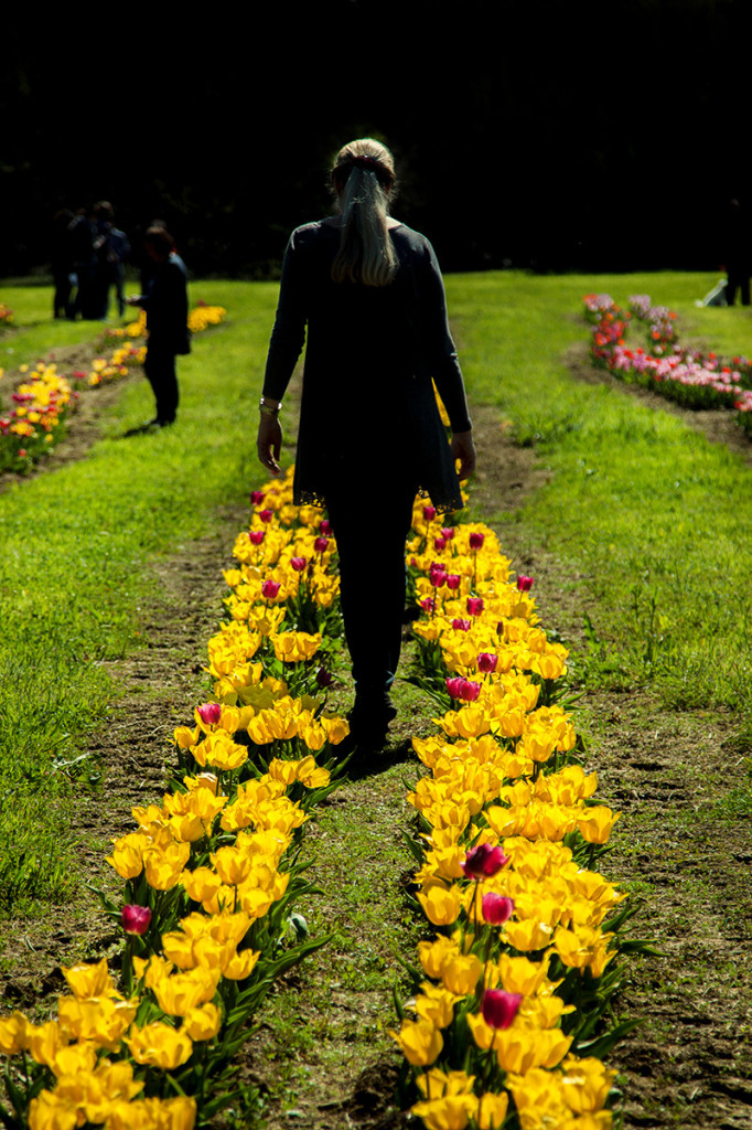 donna fra i tulipani