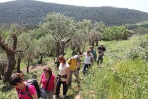 olivi (1)