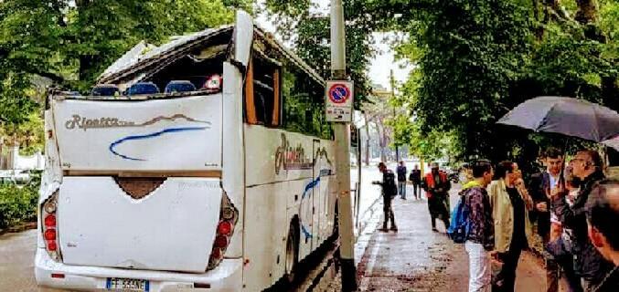 albero su bus