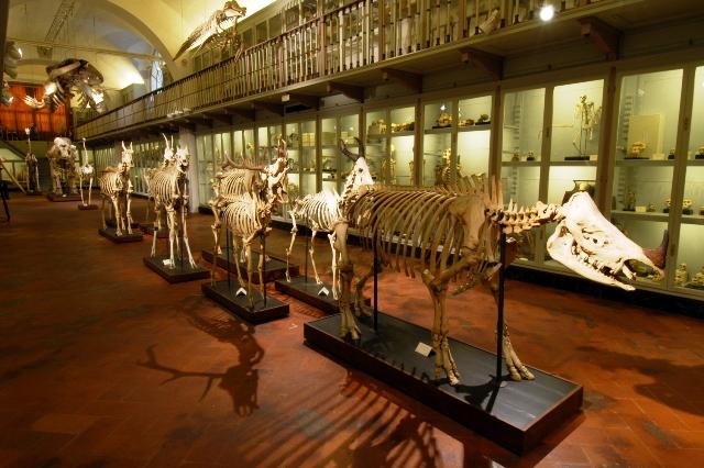 Museo_storia_naturale_salone_scheletri.jpg