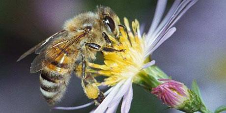 Salviamo_le_api_bees.png