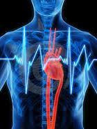 cuore2_thumb.jpg
