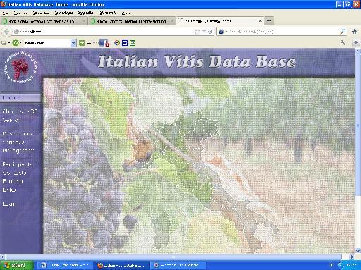 database_vini.JPG