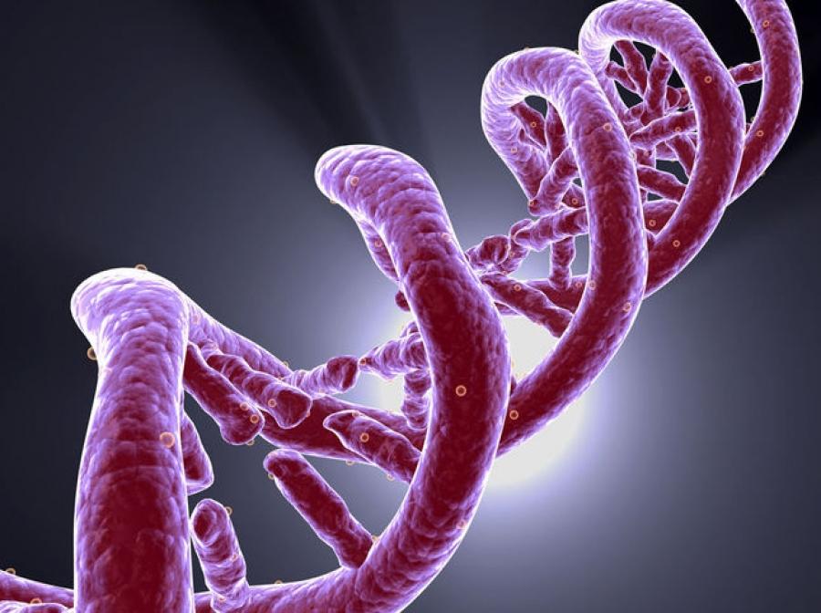 epigenetica_thumb.jpg