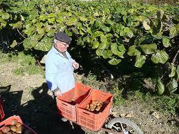 pensionato_agricoltura.jpg