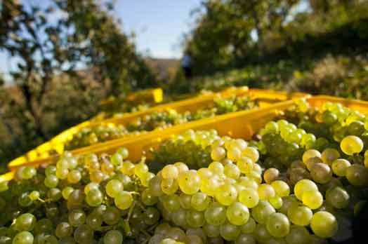 settore-vitivinicolo.jpg