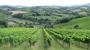 viticoltura_siena.jpg